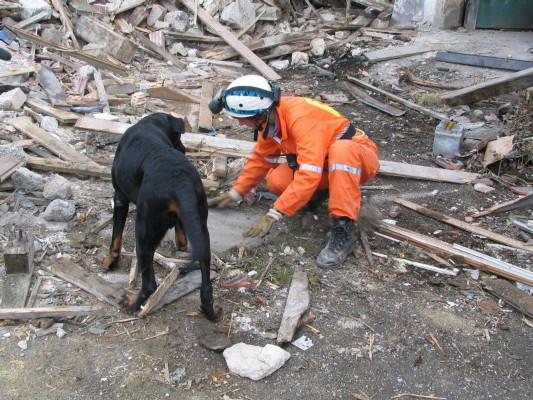 Pes reševalec