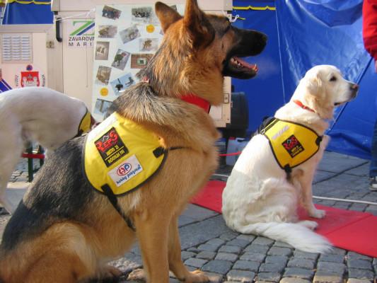 Družni psi