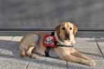 Baron, pes vodič, foto: Peter Irman