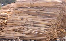 Žamanje  Podolgovate kose lesa, kateri nastanejo med robljenjem oziroma razrezom lesa.