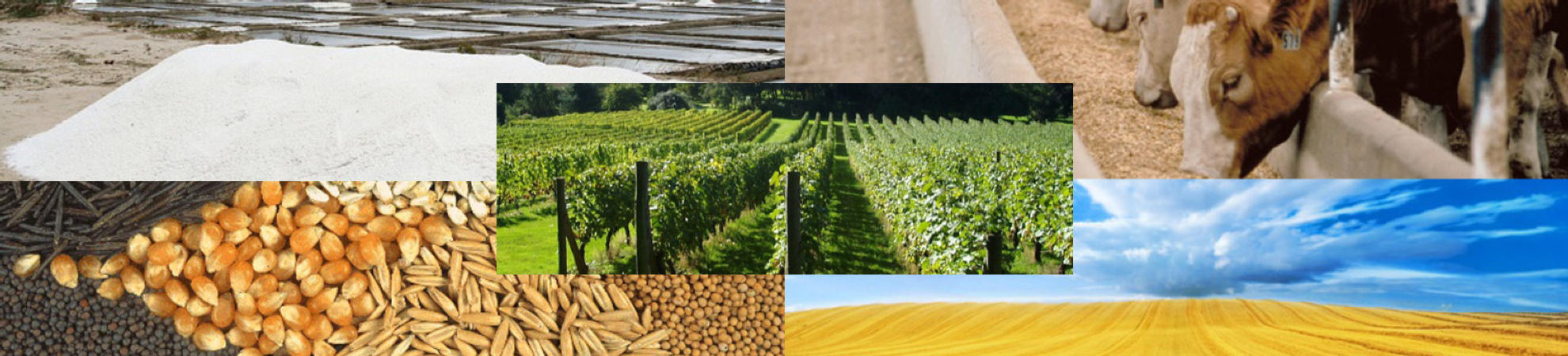 Vse za kmetijstvo na enem mestu  PREBERI VEČ