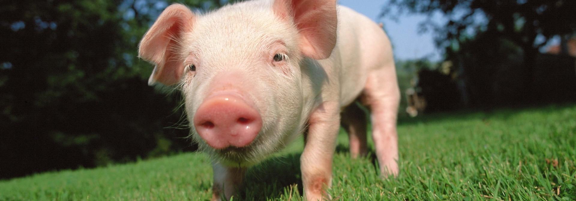 Prehrana, higiena  in zdravje živali Za rejce, veterinarje in lastnike hišnih ljubljenčkov