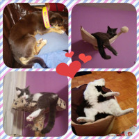 Foxy, Wampy, Ruby in Tango
